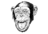 monkey 404