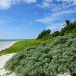 Bahia Honda: Perfection in the Keys