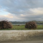 The Long Drive from Mobay
