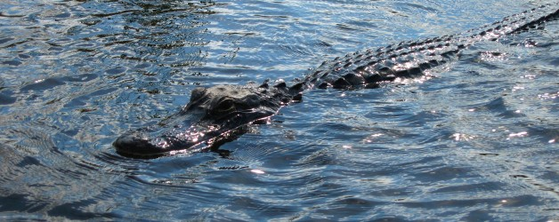 Airboat Tour of the Everglades