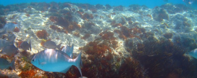 Bermuda: Elbow Beach and St George's